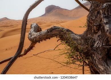 Maliha Desert in UAE