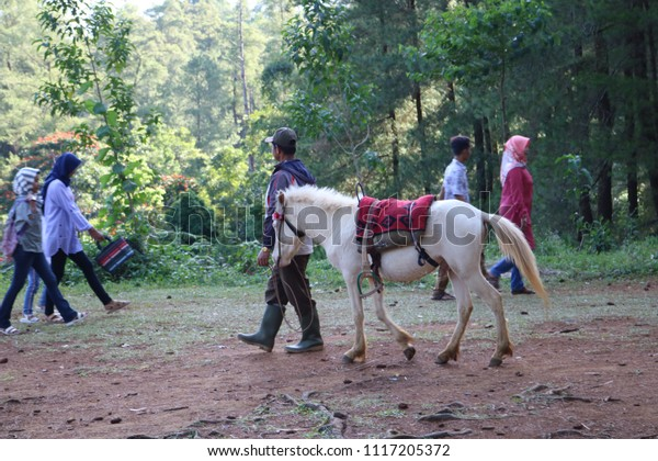 MALINO, INDONESIA - JUNE 19 2018: The atmosphere of Malino pine forest attractions with the many visitors who come. In this place also provides horse riding tours are popular visitors