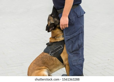 Malinois belgian shepherd guard the border.  The border troops demonstrate the dog's ability to detect violations and neutralize terrorists.