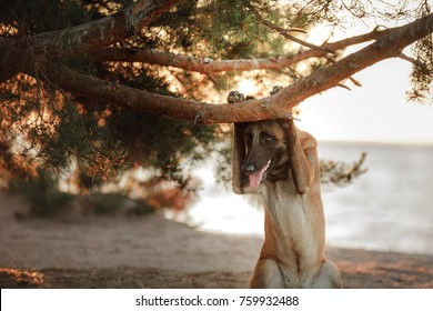 the malinois dog looks out from under the branches