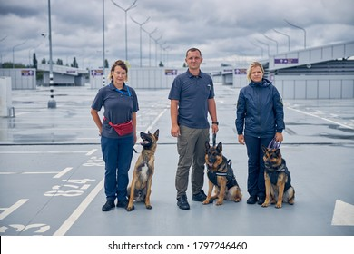 Malinois dog and two German Shepherd dogs on duty with officers at airport