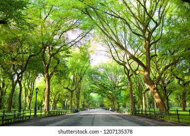 The Mall with American Elms in Central Park, New York