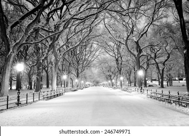 The Mall in Central Park, NYC, during a snow storm, early in the morning.