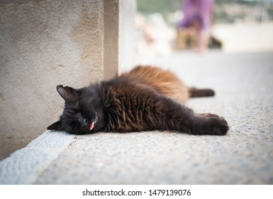 Mallorca 2019: black domestic longhair stray cat with ear notch lying on side outdoors on concrete ground in  the city center of Port de Sóller, Majorca sticking out tongue sleeping