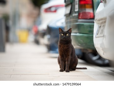 Mallorca 2019: black stray cat with ear notch standing on sidewalk next to parked cars in parking lot looking at camera curiously in Port de Sóller, Majorca