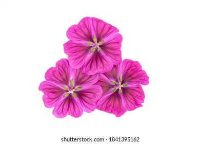 Mallow flower group on white background close up for design - Shutterstock ID 1841395162