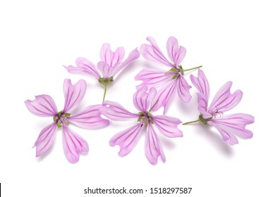 mallow flowers isolated  on white background