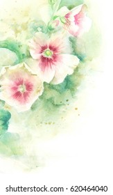 Mallow pink flowers; hand paint watercolor illustration,template for greeting card, banner.