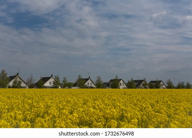 M,ALMO, SWEDEN - MAY 07, 2020: When the agriculture landscape with flowering canola fields meet the urban environment.