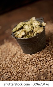 Malt Barley and Hops