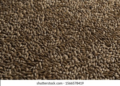 Malt, wheat grains for brewing. Malt background. Top view, flat lay