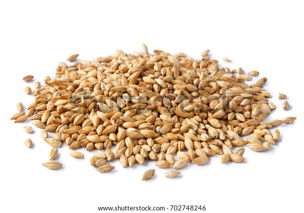 Malted barley isolated on white background with clipping path. Ingredient for brewing beer.