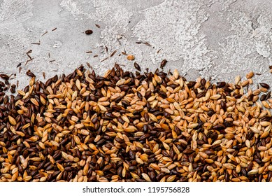 Malted grain closeup. Mixed varieties of malted grain on a gray background. close-up. top view. flat lay. series of photos. space
