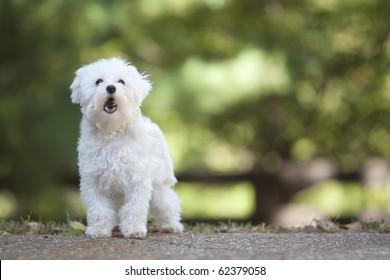 Dog Barking Images, Stock Photos & Vectors | Shutterstock