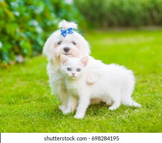 Maltese puppy and chinchilla cat embracing on green grass