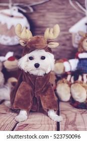 maltese puppy reindeer costume vertical
