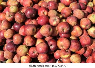 Malus domestica ,Red colour apple in the store.