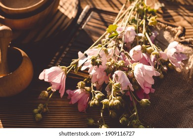 Malva alcea , greater musk-mallow, cut-leaved mallow, vervain mallow or hollyhock mallow fresh flowers collected in meadow. collect herbs for preparation of tincture. mortar to rub flowers. Soft focus - Shutterstock ID 1909116727