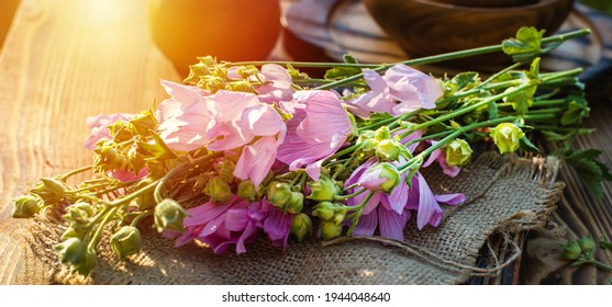 Malva alcea , greater musk-mallow, cut-leaved mallow, vervain mallow or hollyhock mallow fresh flowers collected in meadow. collect herbs for preparation of tincture. mortar to rub flowers. Soft focus - Shutterstock ID 1944048640