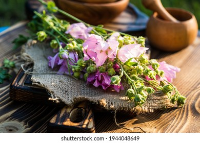Malva alcea , greater musk-mallow, cut-leaved mallow, vervain mallow or hollyhock mallow fresh flowers collected in meadow. collect herbs for preparation of tincture. mortar to rub flowers. Soft focus - Shutterstock ID 1944048649