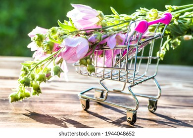 Malva alcea , greater musk-mallow, cut-leaved mallow, vervain mallow or hollyhock mallow fresh flowers collected in meadow. Supermarket trolley with medicinal plants, Soft focus - Shutterstock ID 1944048652
