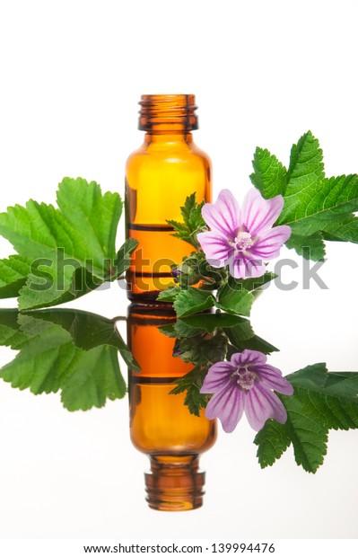 Malva Sylvestris with essential oil
