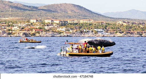 mama and baby whales in Pacific Ocean near Cabo San Lucas
