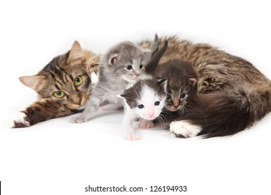 Mama-cat with three kittens on white background
