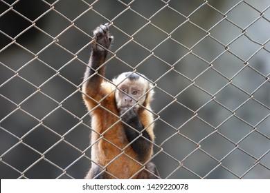 mammal monkey forest thailand asia
