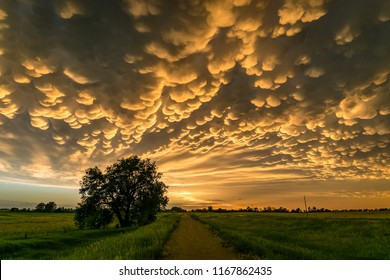 Mammatus over north-central Nebraska.  Mammatus (mamma or mammatocumulus) is a cellular pattern of pouches hanging underneath the base of a cloud, typically cumulonimbus rainclouds.