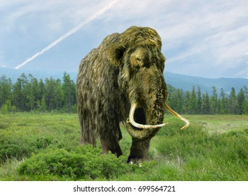 Mammoth cloning.