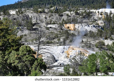 Mammoth Hot Springs in Yellowstone National Park is a popular tourism vacation destination in Wyoming,