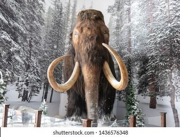 Mammoth Lake, California USA- May 27 2019: Mammoth statue at Mammoth Lake.