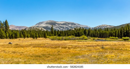 Mammoth Peak is at the northern end of the Kuna Crest in Yosemite National Park, very close to CA State route 120. Its summit appears rounded and rocky from the road.