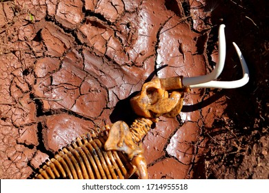 Mammoth toy skeleton portrayed as if it had died of thirst inside a small dry lake and parched by the sun