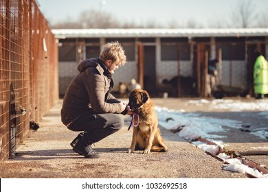 The man affects the dog, obedient and loving dog, captive dogs pull their heads through the bars, the young man feeds a dog, dog sees food and licks on muzzle, the man is training the puppy