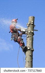 A man arborist is sawing a tree at a height