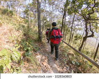 Man backpack walks into the forest, A hiker with backpack is walking in the autumn forest on a sunny day.