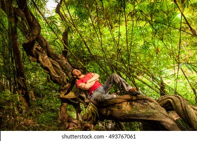 Man backpacker Traveler relaxing outdoor after travel in mountain on roots giant Banyan Ficus tree in tropical jungle on background green bamboo forest at sunny summer day, Lifestyle travel concept