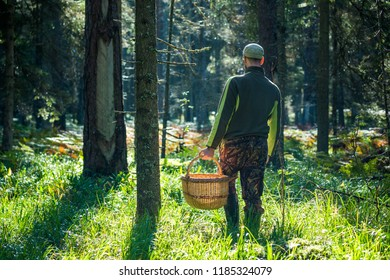 Man with basket searching the mushrooms in the forest