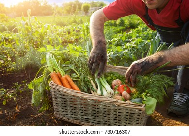 Man and basket with vegetables in the garden