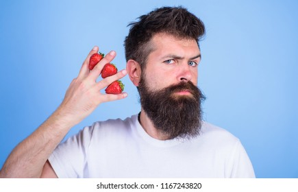 Man beard hipster strawberries between fingers blue background. Carbohydrate content strawberry. Strawberries safest fruit for sugar levels. Mostly carbohydrates sucrose fructose glucose.
