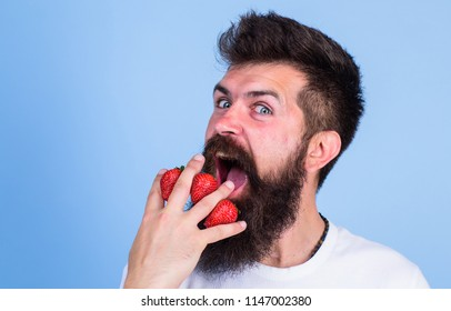 Man beard hipster strawberries fingers blue background. Mostly carbohydrates sucrose fructose glucose. Carbohydrate content strawberry. Metabolic disease. Strawberries safest fruit for sugar levels.