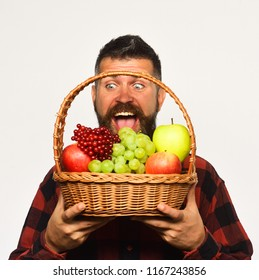 Man with beard holds basket with fruit isolated on white background. Guy holds homegrown harvest. Farming and autumn crops concept. Farmer with excited face presents apples, grapes and cranberries