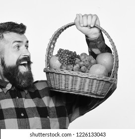 Man with beard holds basket with fruit isolated on white background. Guy holds homegrown harvest. Farming and autumn crops concept. Farmer with cheerful face presents apples, grapes and cranberries.