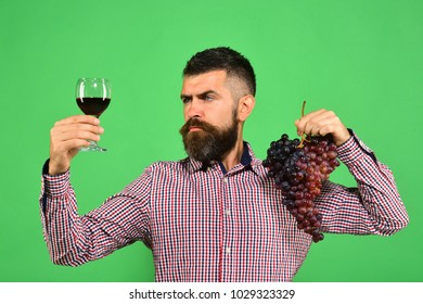 Man with beard holds bunch of grapes and glass of wine on green background. Viticulture and autumn concept. Vintner shows his harvest. Winegrower with concentrated face presents product made of grapes