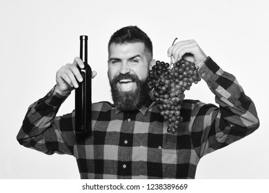 Man with beard holds bunch of grapes and bottle of wine isolated on white background. Vintner shows harvest. Viticulture and autumn concept. Winegrower with happy face presents product made of grapes