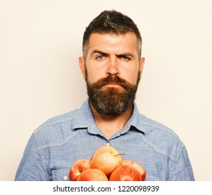 Man with beard holds red fruit isolated on white background. Farmer with calm face and fresh apples. Gardening and autumn concept. Guy presents homegrown harvest.
