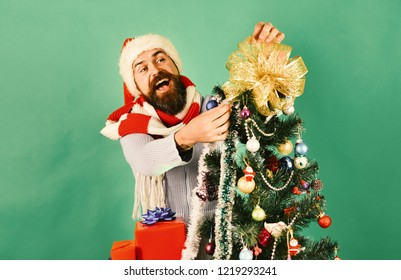 Man with beard and tricky smile puts golden bow on tree top. Holidays and decor concept. Santa in red hat decorates Christmas tree. Hipster with happy face on green background
