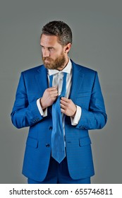 man, bearded handsome businessman in blue formal jacket, tie on grey background, business and fashion